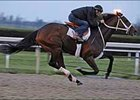 Derby hopeful Hard Spun works Monday at Keeneland.