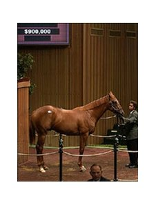 Distorted Humor colt brought $900,000 on fourth day of sale.
