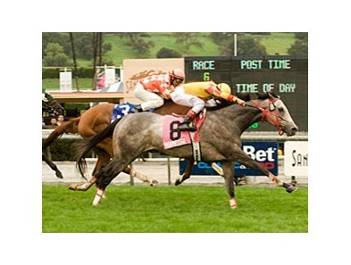 "2009 Sunshine Millions Turf winner Soldier's Dancer is back to try to repeat in 2010.<br><a target=""blank"" href=""http://www.bloodhorse.com/horse-racing/photo-store?ref=http%3A%2F%2Fpictopia.com%2Fperl%2Fgal%3Fprovider_id%3D368%26ptp_photo_id%3D7536706%26ref%3Dstory"">Order This Photo</a>"