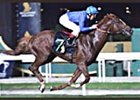 Grandera, shown winning the International Cup in Singapore, took the Prince of Wales Stakes at Royal Ascot on Wednesday.