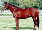Cutlass Reality stood his entire stud career at Harris Farms in California.