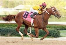 Curlin Sweeps Into Derby Picture With Rebel Rout