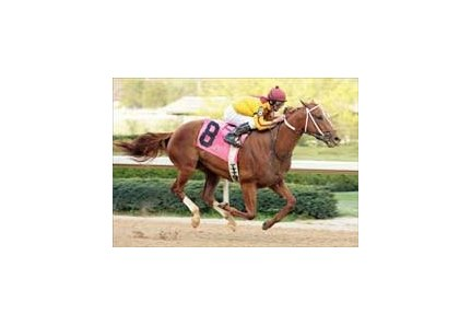 "Curlin enters Derby picture with impressive win in Oaklawn's Rebel Stakes.<br><a target=""blank"" href=""http://www.bloodhorse.com/horse-racing/photo-store?ref=http%3A%2F%2Fpictopia.com%2Fperl%2Fgal%3Fprovider_id%3D368%26ptp_photo_id%3D895225%26ref%3Dstory"">Order This Photo</a>"