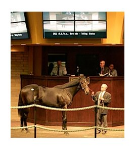 Hip 206 was the sale topper at the Barretts October Yearling Sale.