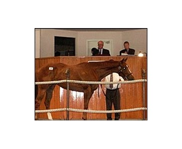 Lovely Journey, brought top price at Barretts summer sale.