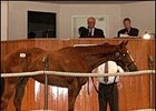 Helmsman Filly Tops Barretts Summer Sale