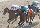 Bird Town (7) makes it two in a row with Acorn win.