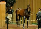 Mushka was purchased for $2.4 million at auction last November by Elizabeth Moran's Brushwood Stable.