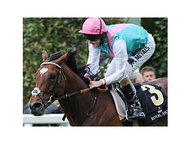 "Frankel is expected to make his final start in the in the QIPCO Champion Stakes.<br><a target=""blank"" href=""http://photos.bloodhorse.com/AtTheRaces-1/at-the-races-2012/22274956_jFd5jM#!i=2113689526&k=njt8rbx"">Order This Photo</a>"