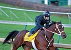 Havre de Grace working at Churchill Downs 10/31/2011.