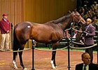 Ashado, selling for then world-record $9 million at the Keeneland Nov. 2005 sale.