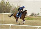 Discreet Cat was among the Godolphin runners breezing at Nad al Sheba racecourse Wednesday.