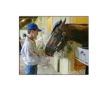 Belmont Stakes winner Empire Maker, being fed a carrot by jockey Jerry Bailey, may face Funny Cide in the Travers Stakes.