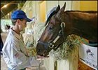 Jerry Bailey feeds a carrot to Empire Maker the morning after the pair won the Belmont Stakes.