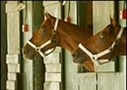 Funny Cide, left, 8-5 morning line favorite for Haskell Invitational.
