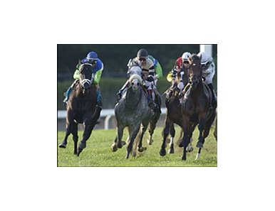 Ocean Drive (blue cap) laps the field at the top of the stretch on the way to a dramatic win in the Noble Damsel.