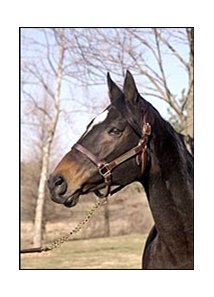 Toussaud, the dam of multiple grade/group I winners in the same year.