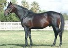 Robannier will stand at Madera Thoroughbreds near Madera, Calif.