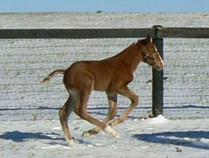 Frost Giant's First Foal a Jan. 31 Colt