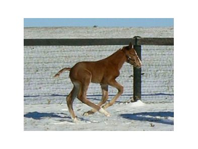 First foal for Frost Giant, a colt out of Apocalyptic, born Jan. 31.