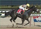 Passing Shot crosses the finish line in the Bed O' Roses Breeders' Cup Stakes at Aqueduct.