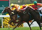 Doctor Dino (center, shadow roll) gets up in a thrilling finish of the Dec. 14 Hong Kong Vase.