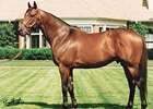 Smart Strike is one of four horses to be inducted into the Canadian Horse Racing Hall of Fame in 2008.