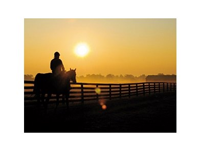 Three Chimneys Farm morning