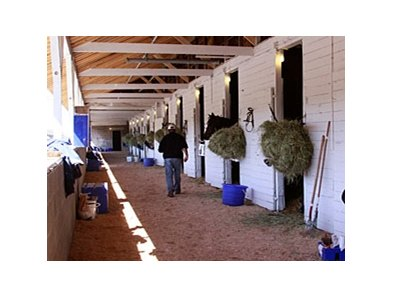 Horses trained by Steve Margolis settle in at Barn 23, the barn most severely damaged by the June 22 tornado at Churchill Downs.