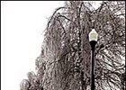 Ice Storm Disrupts Some Breeding Activities