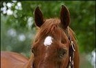 "Stallion Diesis, has died at age 26.<br><a target=""blank"" href=""http://www.bloodhorse.com/horse-racing/photo-store?ref=http%3A%2F%2Fpictopia.com%2Fperl%2Fgal%3Fprovider_id%3D368%26ptp_photo_id%3D666082%26%26ref%3Dstory"">Order This Photo</a>"