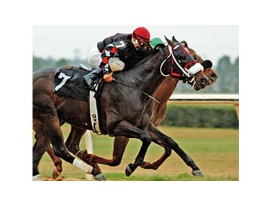 Mighty Mecke winning the 2005 OBS Championship Stakes.