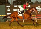 Jeranimo won the Citation Handicap (gr. IIT) at Hollywood last November.