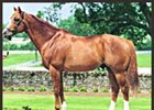 Darby Dan Farm stallion Meadowlake, whose dam died May 23.