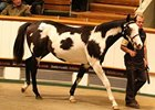 Tattersalls Book 3 Enjoys Gains in Results