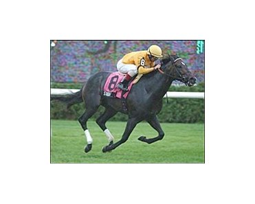 Stroll wins the NMR Hall of Fame Stakes Monday at Saratoga.