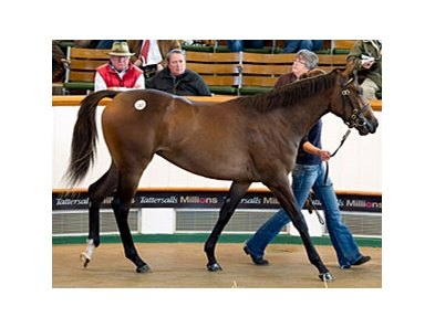 Lot 287, filly, Galileo - Gwynn by Darshaan brought 900,000 guineas on the second day of the Tattersalls October yearling sale in England.