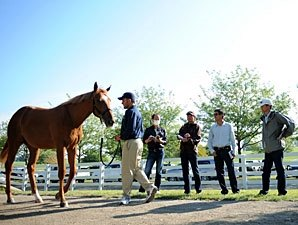 Yearling Market Roars Through Book Three