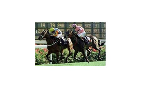 Sunline and jockey Greg Childs, winning the Hong Kong Mile.