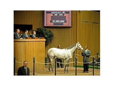 Hip# 670, Miss Isella (Silver Charm - La Cucina by Last Tycoon) brought $1.085 million at the Keeneland January horses of all ages sale Jan. 12.