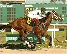 Bluegrass Cat Bounds into Tampa Bay Derby