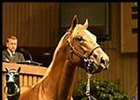 Storm Cat colt, sold for $2.5 million at Keeneland's second sale session.