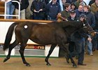 House In Wood (FR), Woodman - Housatonic by Riverman, brought 450,000gns at Tattersalls February Sale.