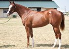 Daecallherdastreak, filly; City Zip - Streak of Malagra by Malgra, topped the sale at $78,000.