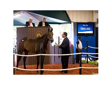 Colt; Empire Maker - Bank Audit by Wild Rush brought $800,000 at the Fasig-Tipton Florida select sale of 2-year-olds in training.