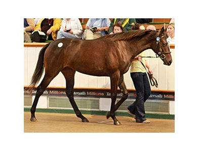 Lot 112; filly, Galileo - Gwynn by Darshaan brought 800,000 guineas to top the opening session of the Tattersalls October yearling sale.