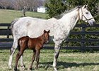 Champion Informed Decision Delivers Colt