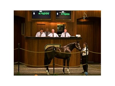 colt; Tiznow - Six Pack Sally by Tale of the Cat brought $475,000 at the Ocala Breeders' Sales Co. February select sale of 2-year-olds in training.