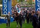 "Frankel after winning the QIPCO Champion Stakes.<br><a target=""blank"" href=""http://photos.bloodhorse.com/AtTheRaces-1/at-the-races-2012/22274956_jFd5jM#!i=2162079039&k=3CFNGZq"">Order This Photo</a>"
