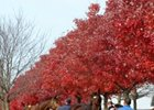 Changes at Keeneland, Fasig-Tipton Fall Sales